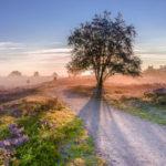 15 leuke uitjes op de Veluwe voor tieners