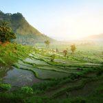 Ontdek alle hoogtepunten van het Indonesische eiland: Bali