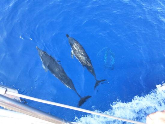 Dolfijnen spotten tijdens rondreis in Griekenland