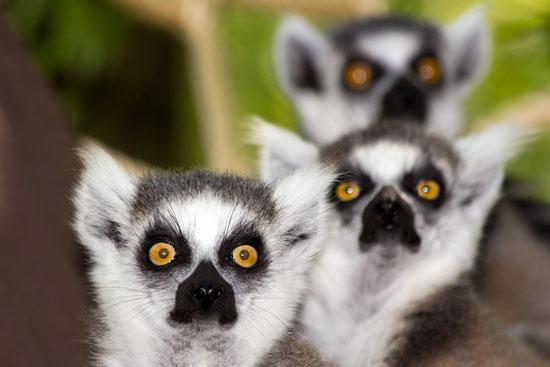 Familierondreis Madagascar Mauritius