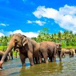 Unieke rondreis door Sri Lanka voor gezin met tieners