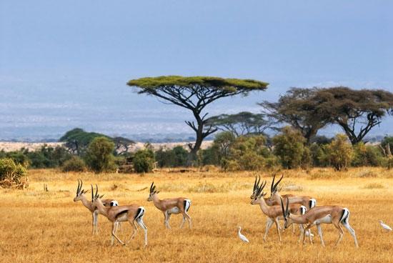 Gezinsrondreis door Afrika