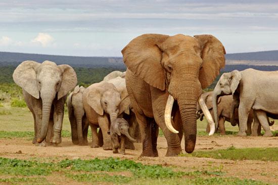 Safari tijdens je rondreis in Zuid-Afrika