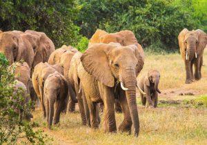 9-Daagse indrukwekkende safari door het veelzijdige Kenia