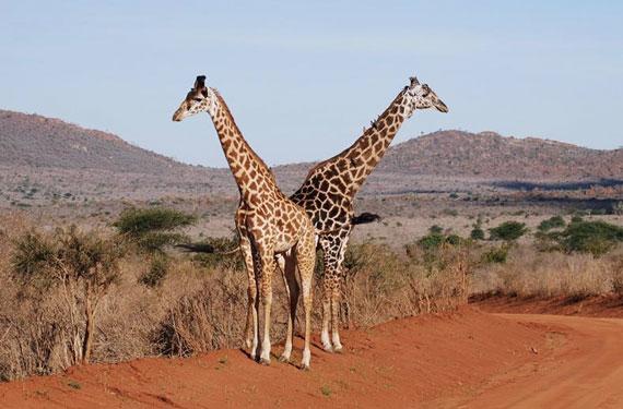 Rondreis Kenia met tieners