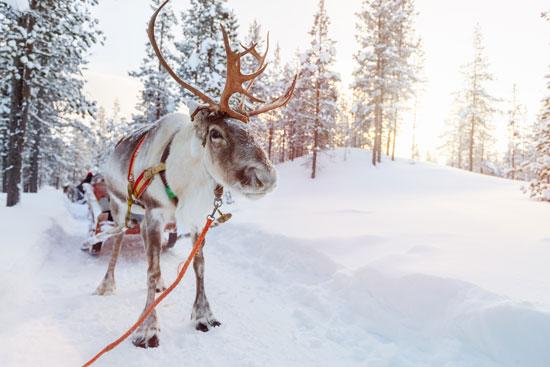 Rondreis Lapland met tieners