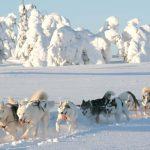 Finally! Naar Fins Lapland met tieners