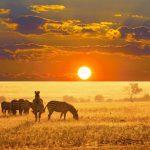 Bezoek de mooiste plekjes van Zuid-Afrika