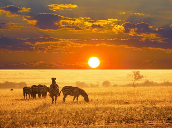 Zuid-Afrika reis op maat
