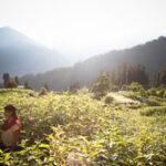 Avontuurlijke groepsrondreis met vrijwilligerswerk in India