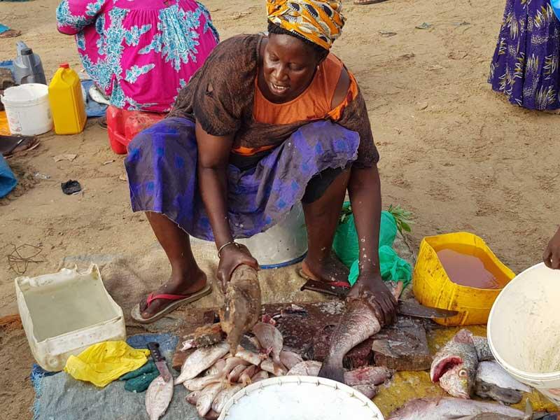 Bezoek de visafslag als je reist door Senegal