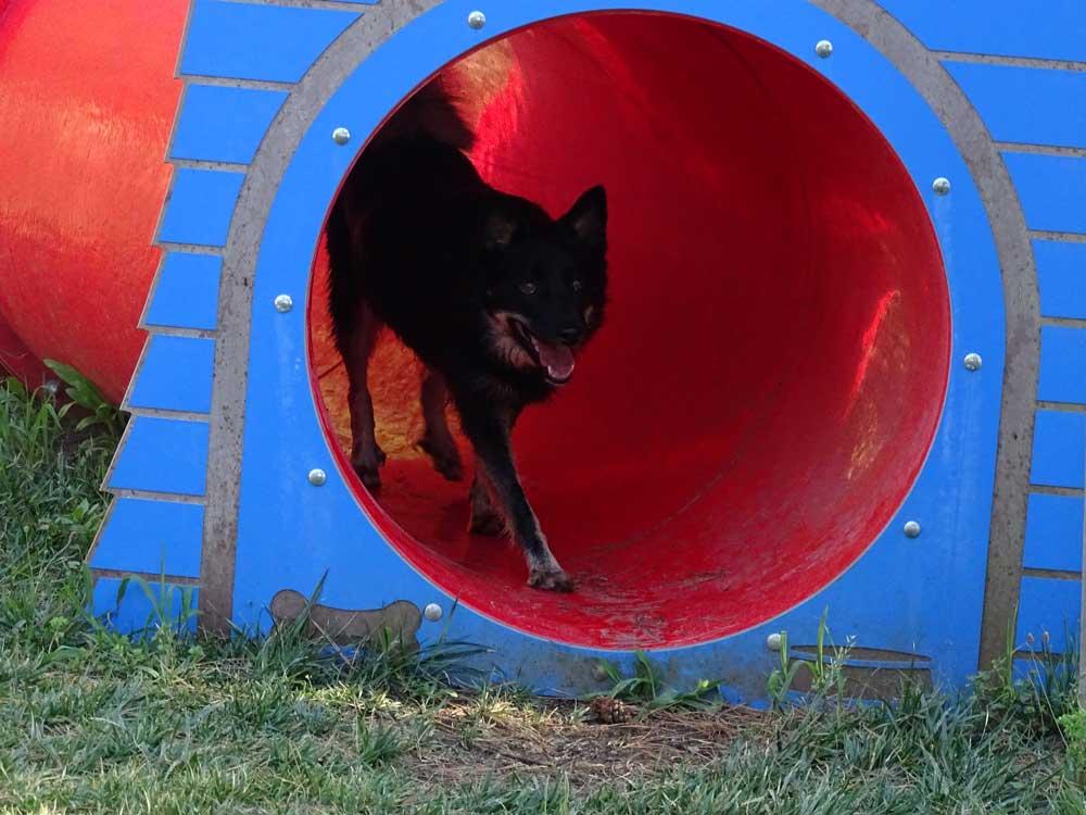 Hondvriendelijke camping Kroatië