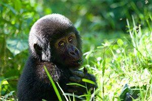 Unieke privé rondreis in Uganda