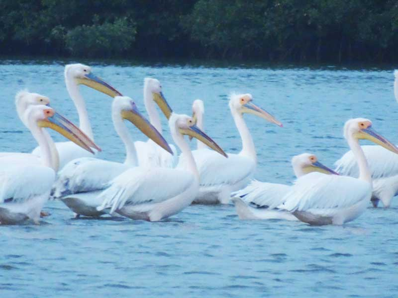 La Somone, vogelreservaat in Senegal
