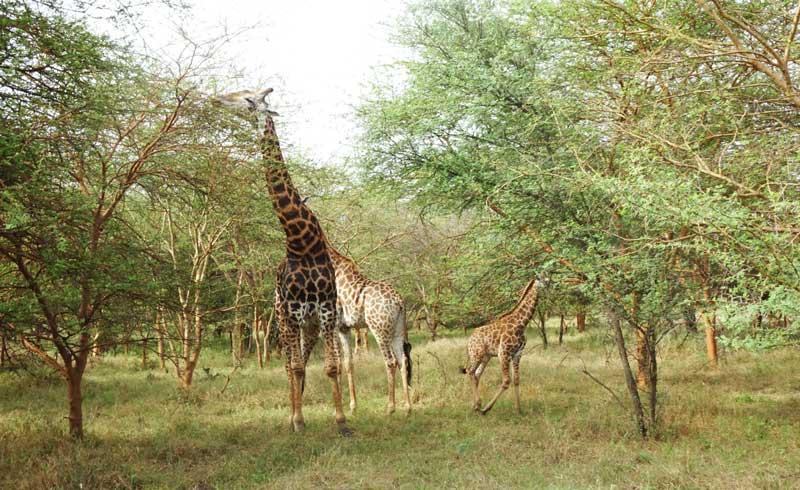 Op wildsafari in Senegal!